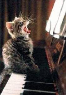 Gatto pianoforte.JPG