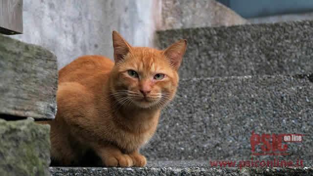 La gatta alienata... nei pressi di casa mia